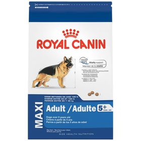 royal-canin-maxi-adult-5--1